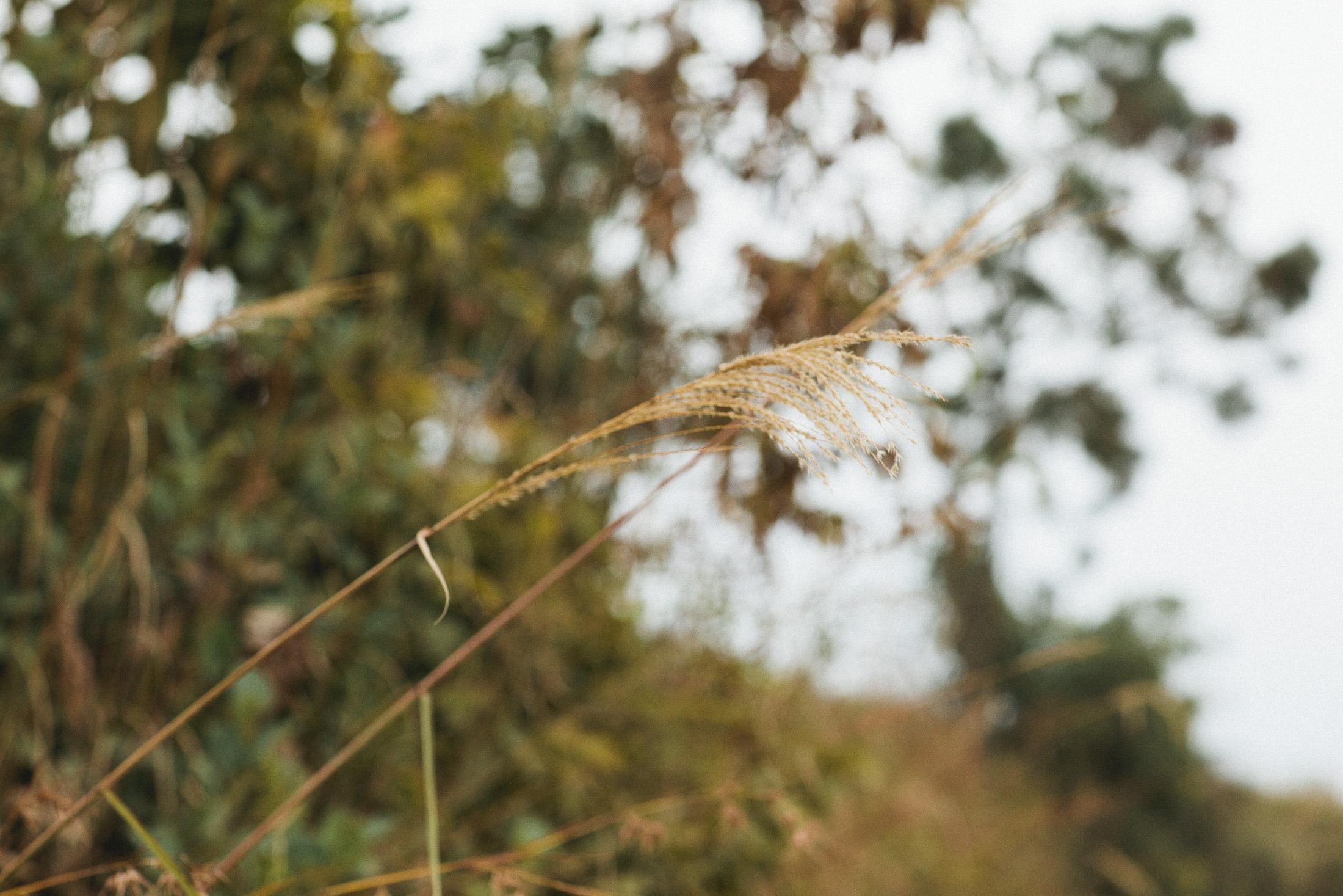 IU_China2010_0209.jpg