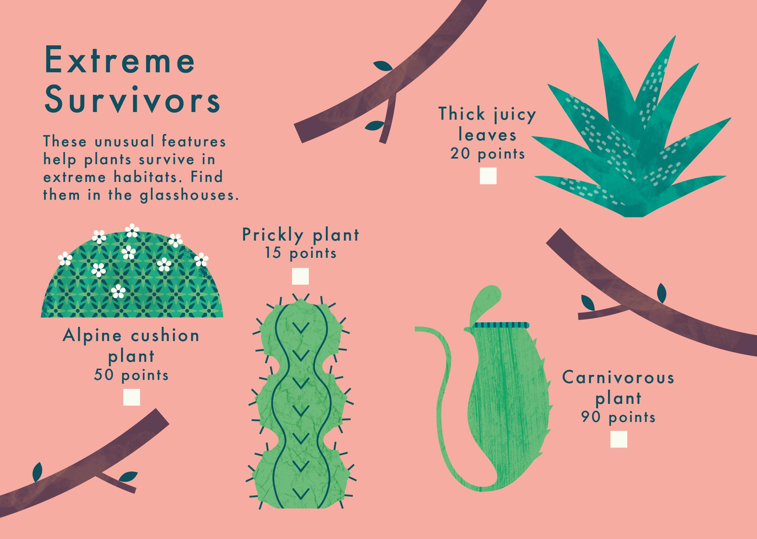know+tell-find me 2 plant spotting guide-illustration-education-design-08-02.jpg