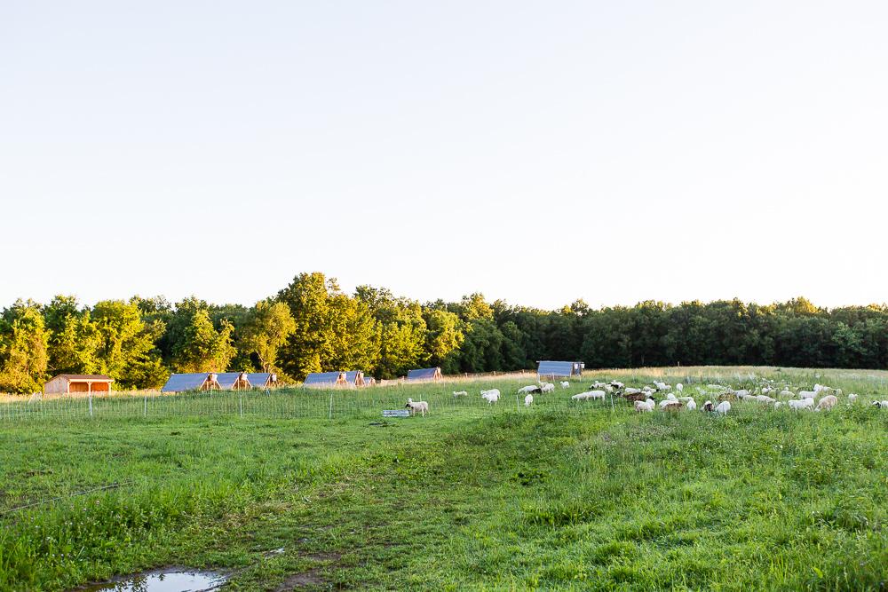Arius-Photo-Karl-Family-Farms-Free-Range466.JPG