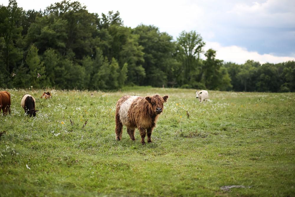 Arius-Photo-Karl-Family-Farms-Free-Range481.JPG