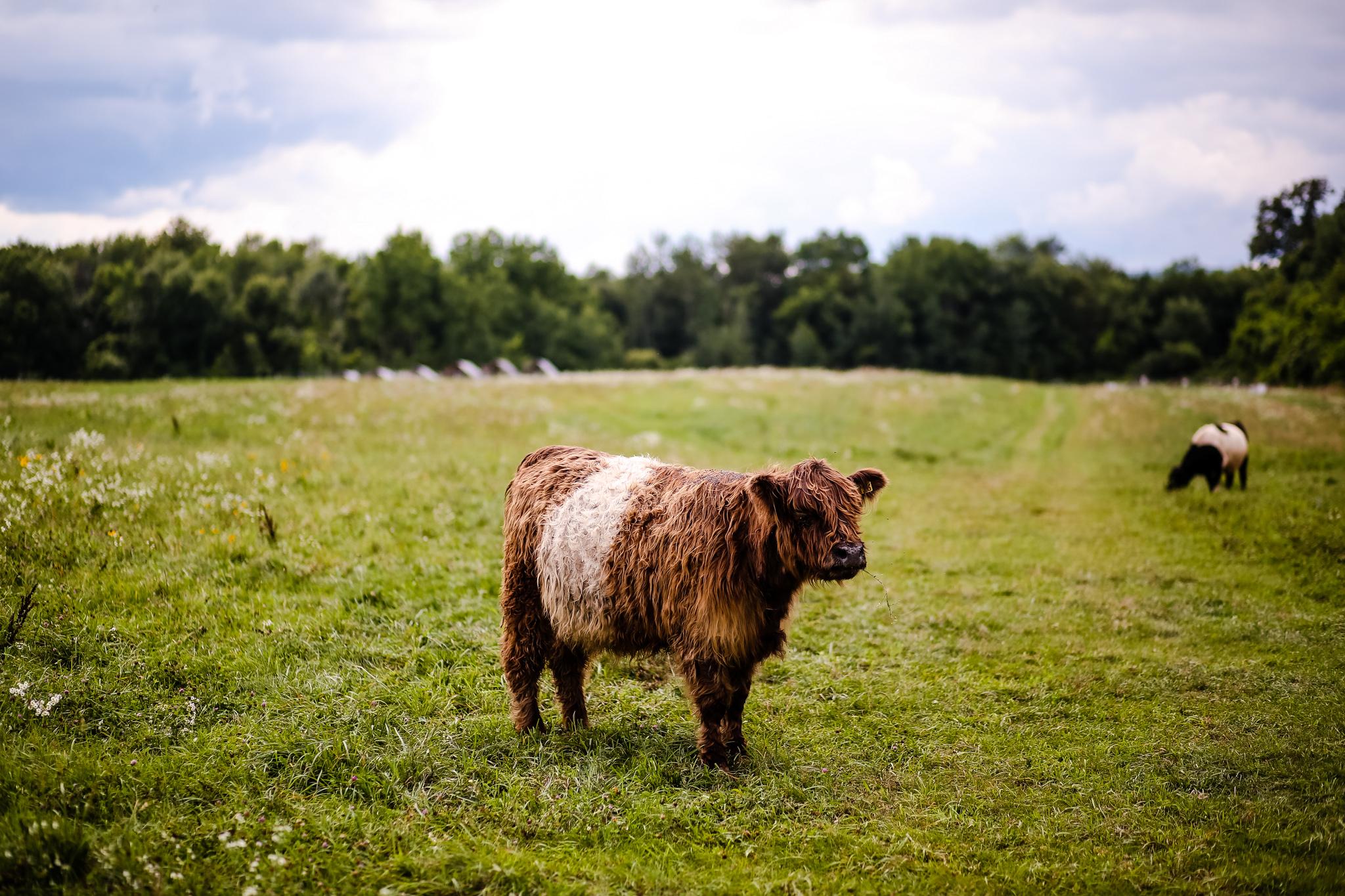 AriusPhoto-KFF-animals-1.jpg