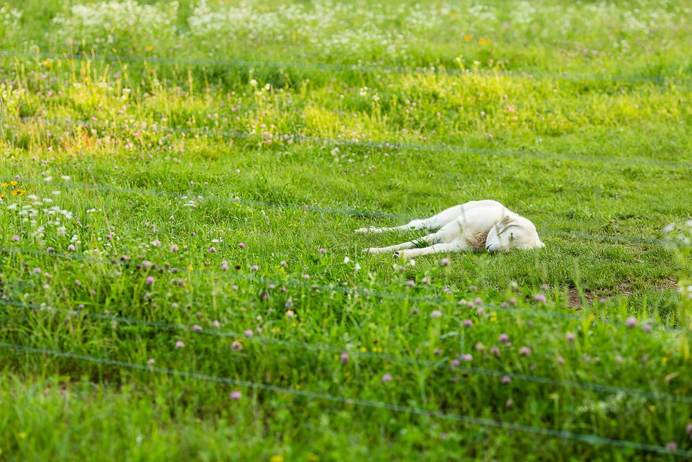 Arius-Photo-Karl-Family-Farms-Free-Range454.JPG