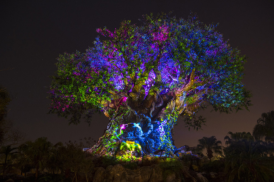 The Tree of Life Awakens  – Here's a first look at Animal Kingdom's iconic  Tree of Life  as it undergoes an extraordinary transformation. You can expect to see animal spirits come to life throughout the evening by magical fireflies. Each scene appears to emanate from within the tree itself and reveals stories of wonder.