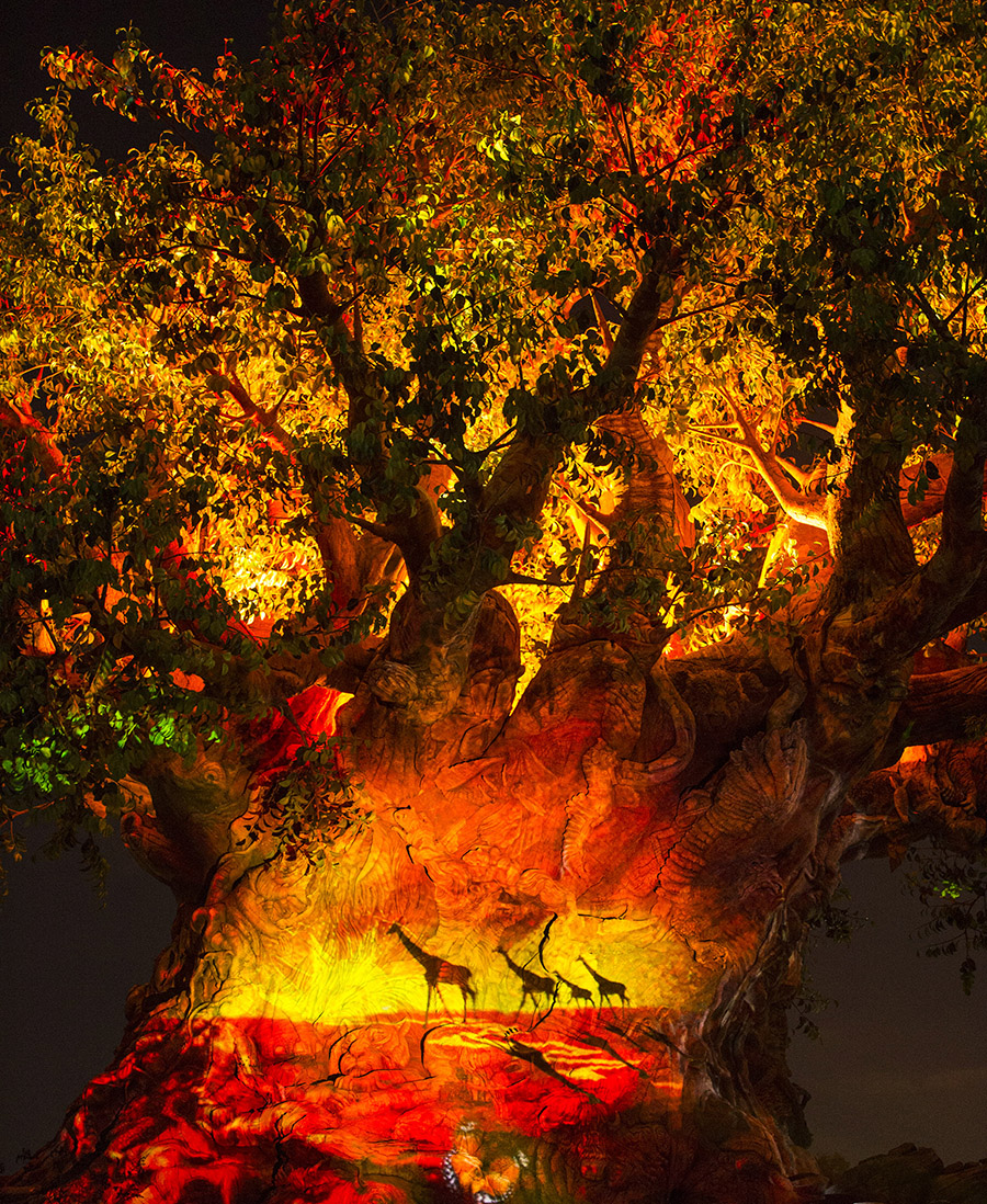 tree_of_life_night_disney