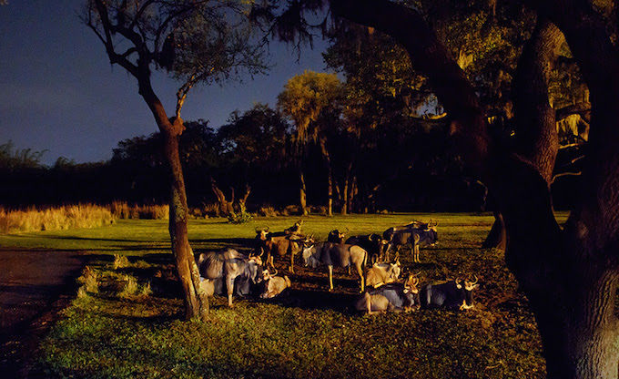 What to expect with a Kilimanjaro Safaris night time expedition.