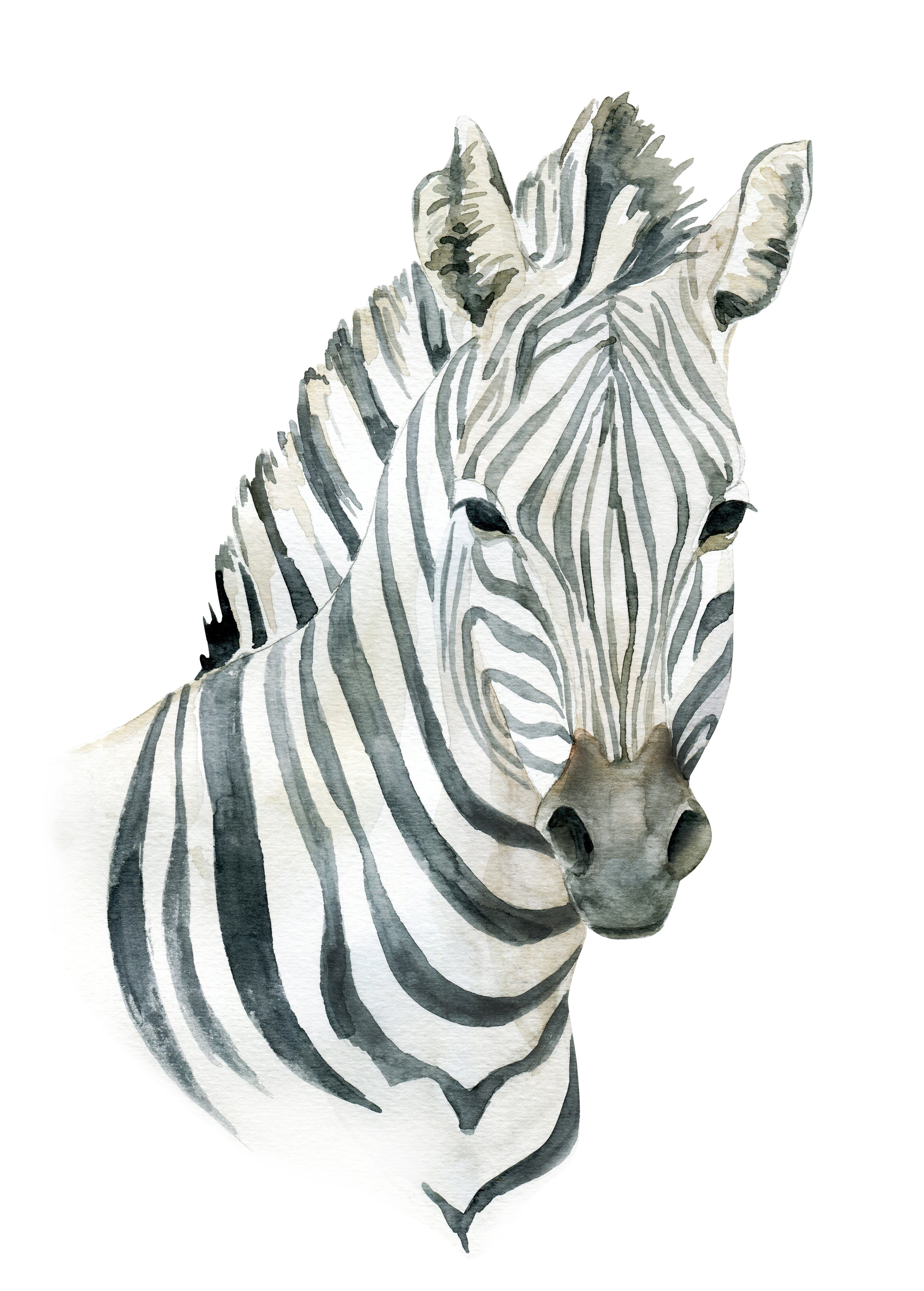 zebra045_retouched.jpg