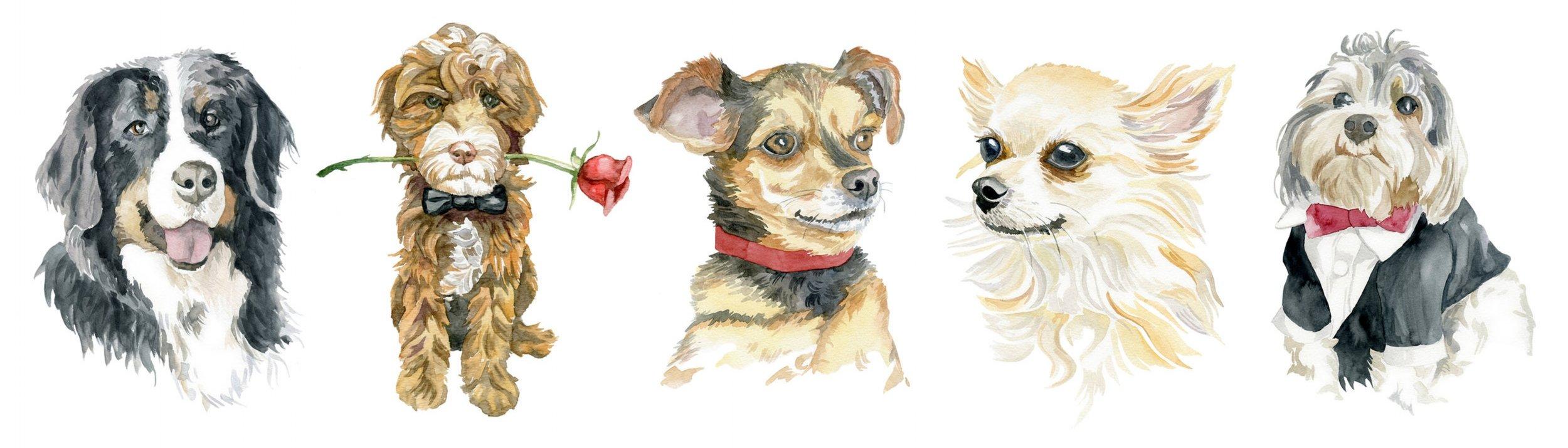 dog_composite.jpg