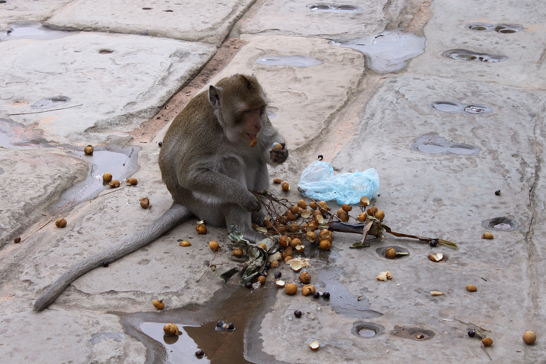 monkey_eating.jpg