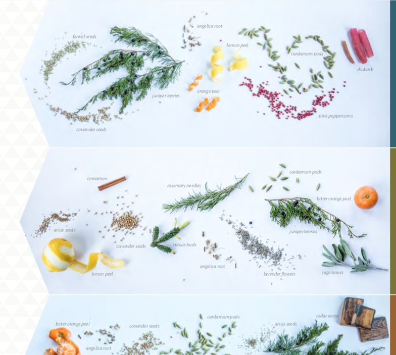 brochure gin botanicals screenshot