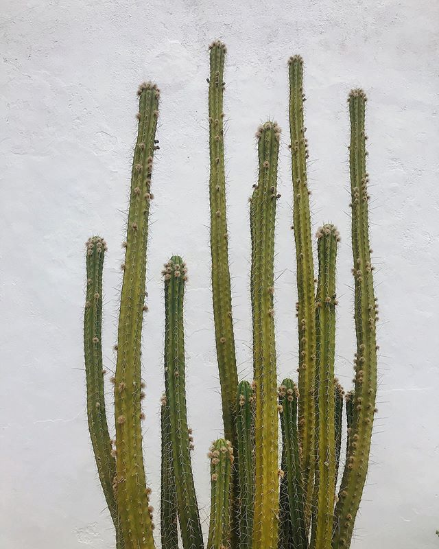 A bouquet of middle fingers