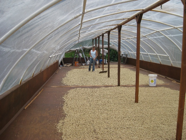 Drying Parchment