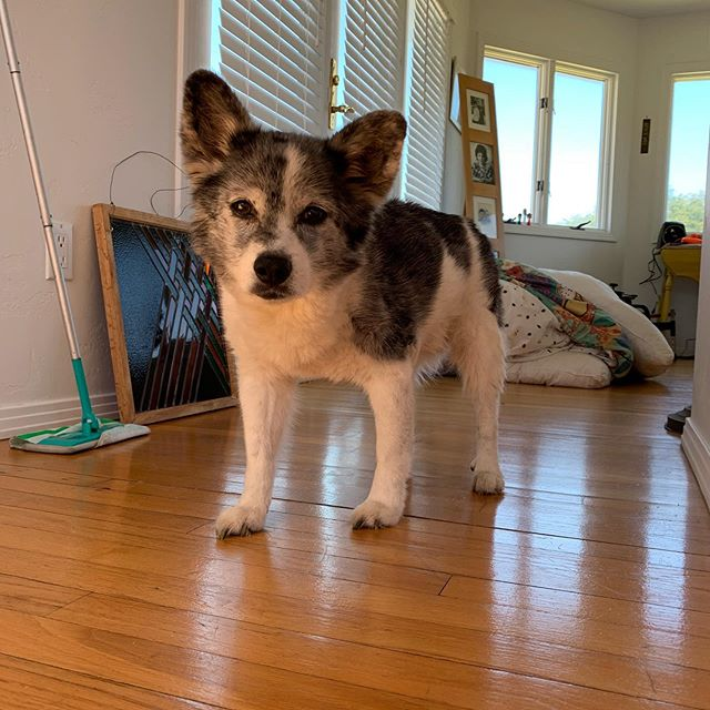 It's been hard to post about this, but last week we had to say good bye to Bingo who was one of the cutest and silliest companions anyone could ask for. He annoyed Remo to the end and could never stand the sight of my parents dancing. I'll miss see him splatted out on the floor right in the way of anyone walking through the house, endlessly bounding after tennis balls in the backyard and jumping over things 3 times his height. Thank you, Bingo, for bringing joy to all our family gatherings. We love you and miss you very much♥️