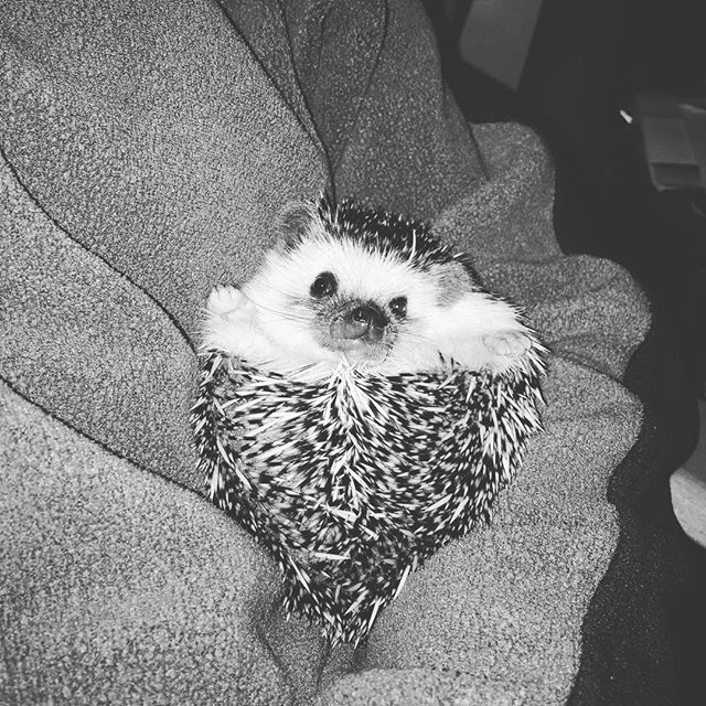 Missing this pokey boi even on our honeymoon 🦔#nationalpetday @mr.poko_ono