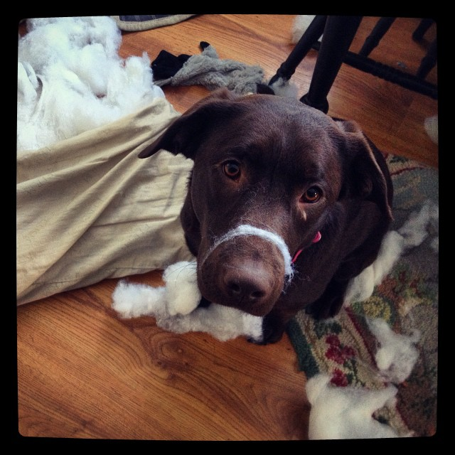 It wasn't me, Mom, honest!
