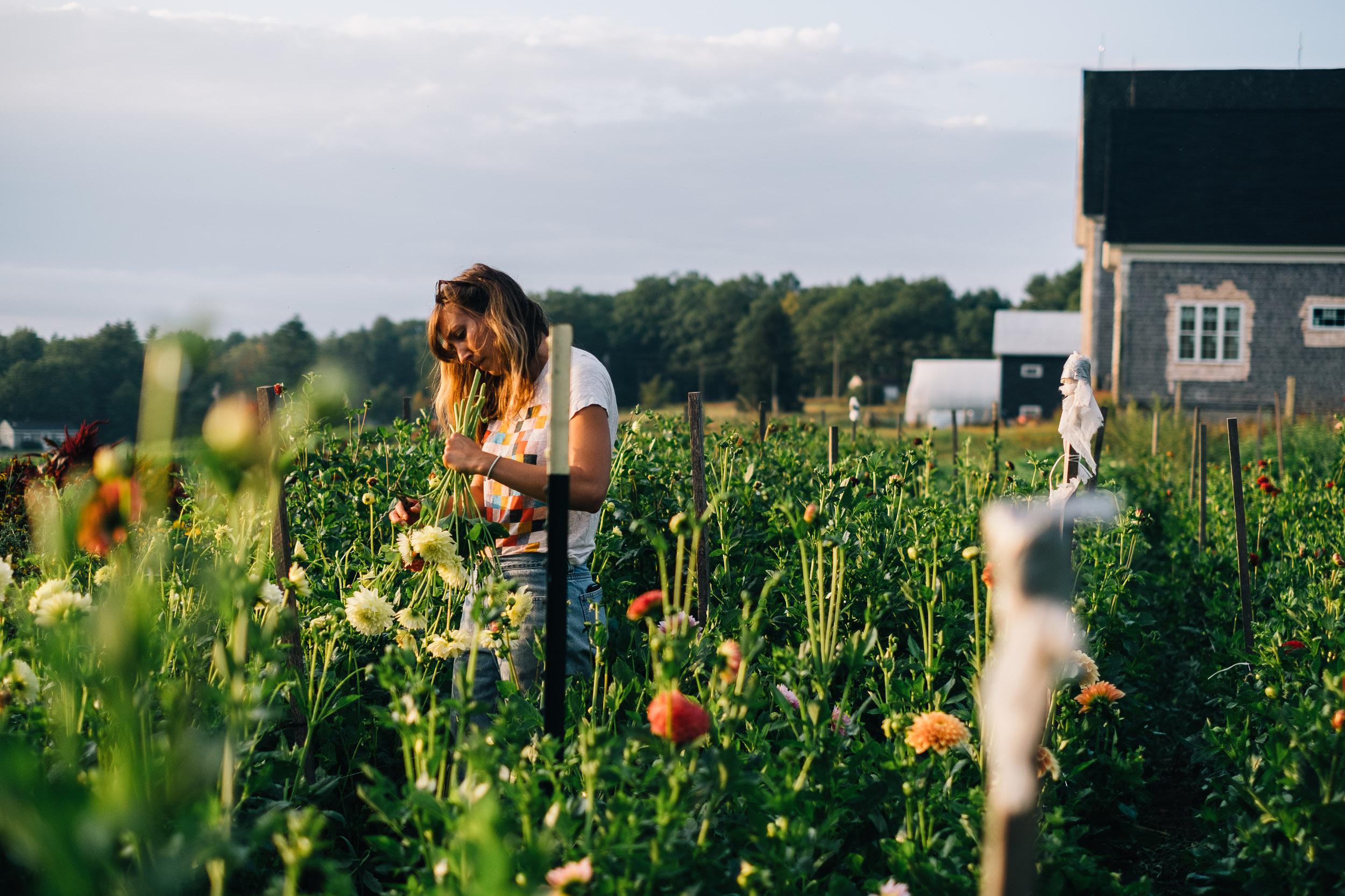 Bumbleroot Farm_091517 (1 of 1)-15 (2).jpg