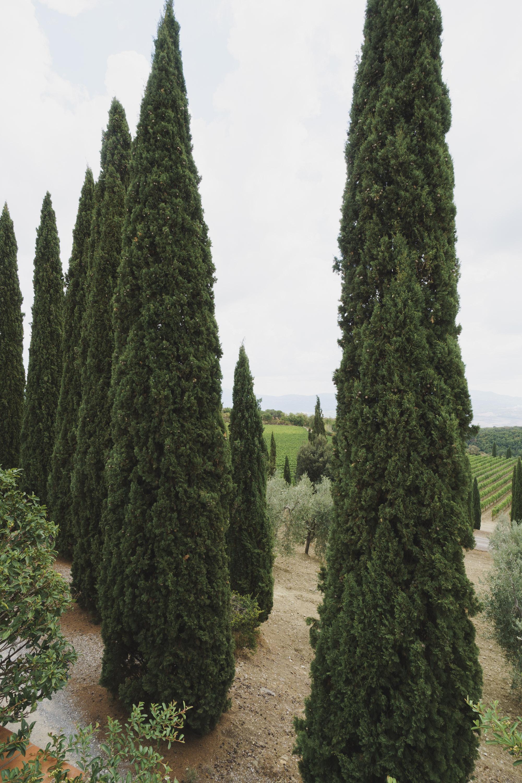 O_Italy-Tuscany-425.jpg