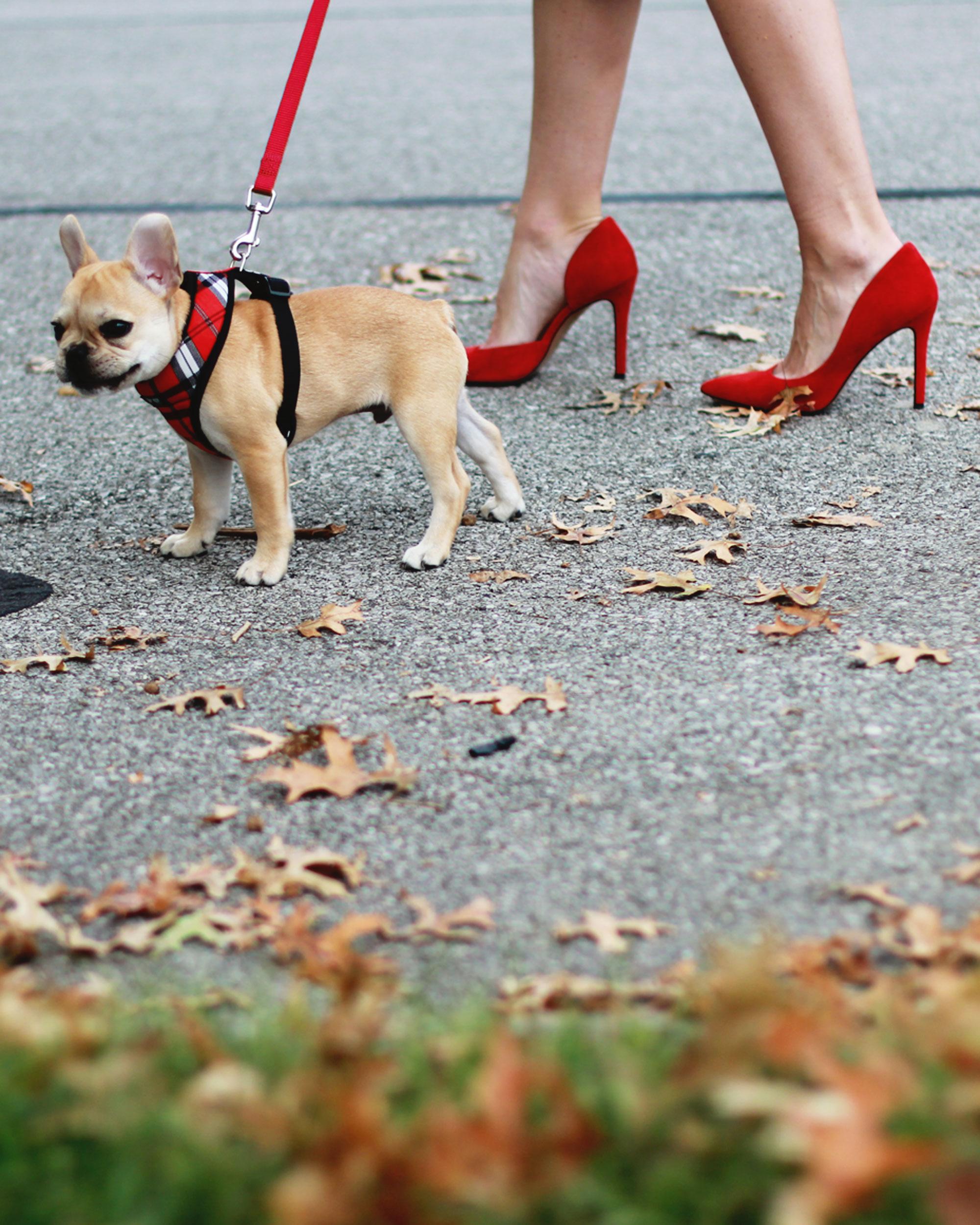 Fall Fashion, JOA Lace Body-Con Dress, Wedding Guest Attire, Statement Necklace, Midi Dress, Jessica Simpson Claudette Pumps, Fawn French Bulldog Puppy