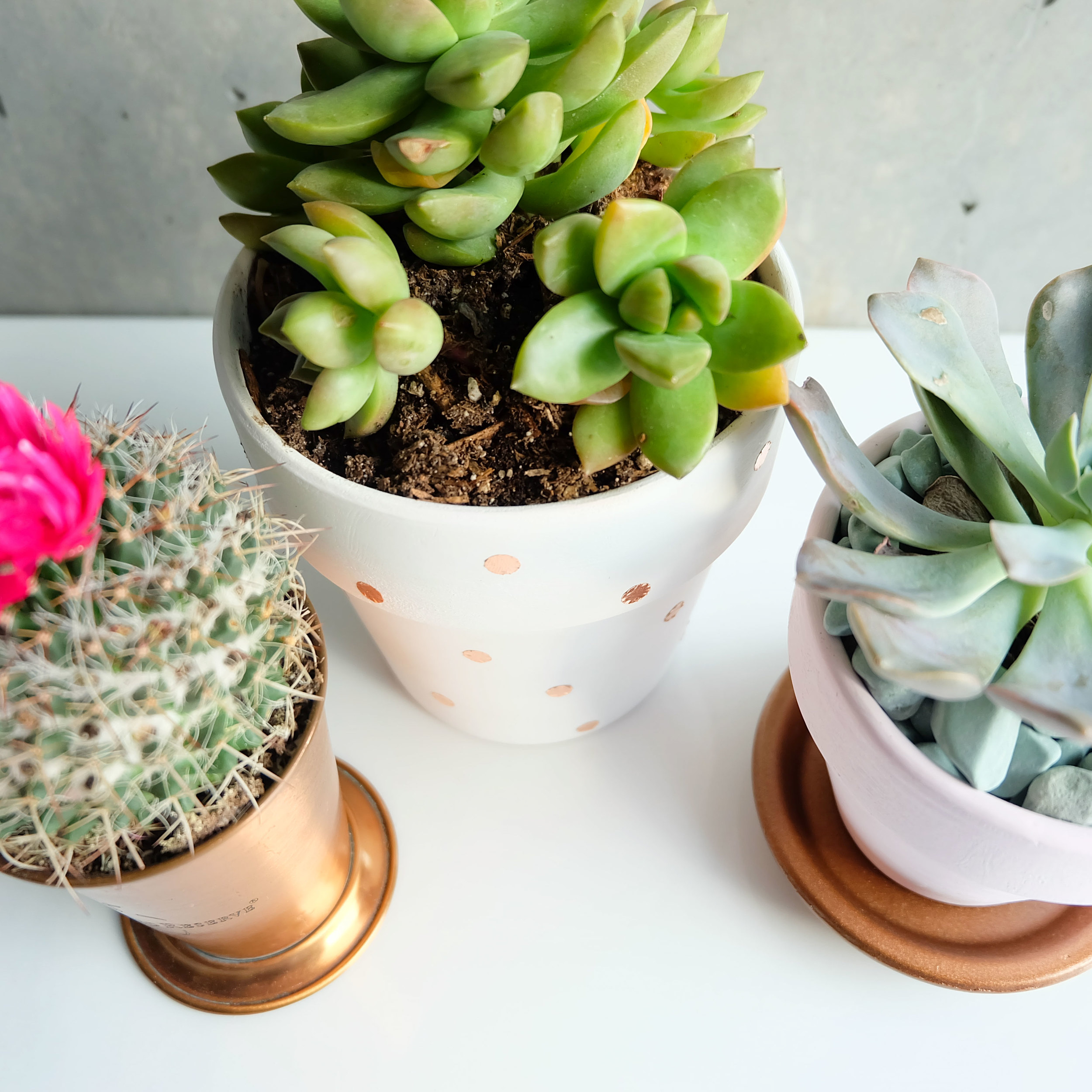 DIY succulent planters, copper foil tape polka dots, Indoor plants, Easy & inexpensive DIY