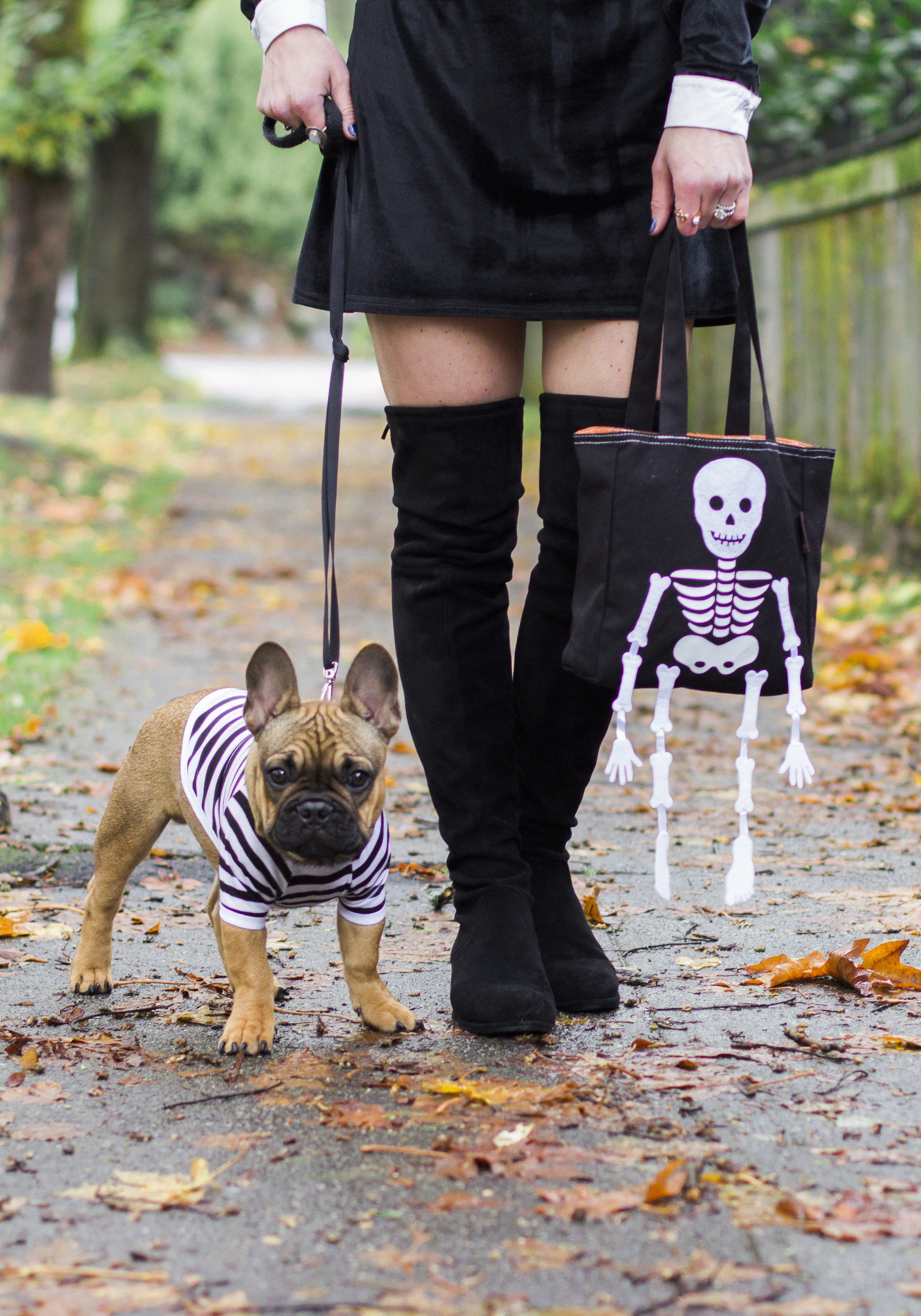 Easy Halloween costume, Addams Family costumes, french bulldog costume, Wednesday Addams DIY costume, Halloween hostess gifts from Papyrus