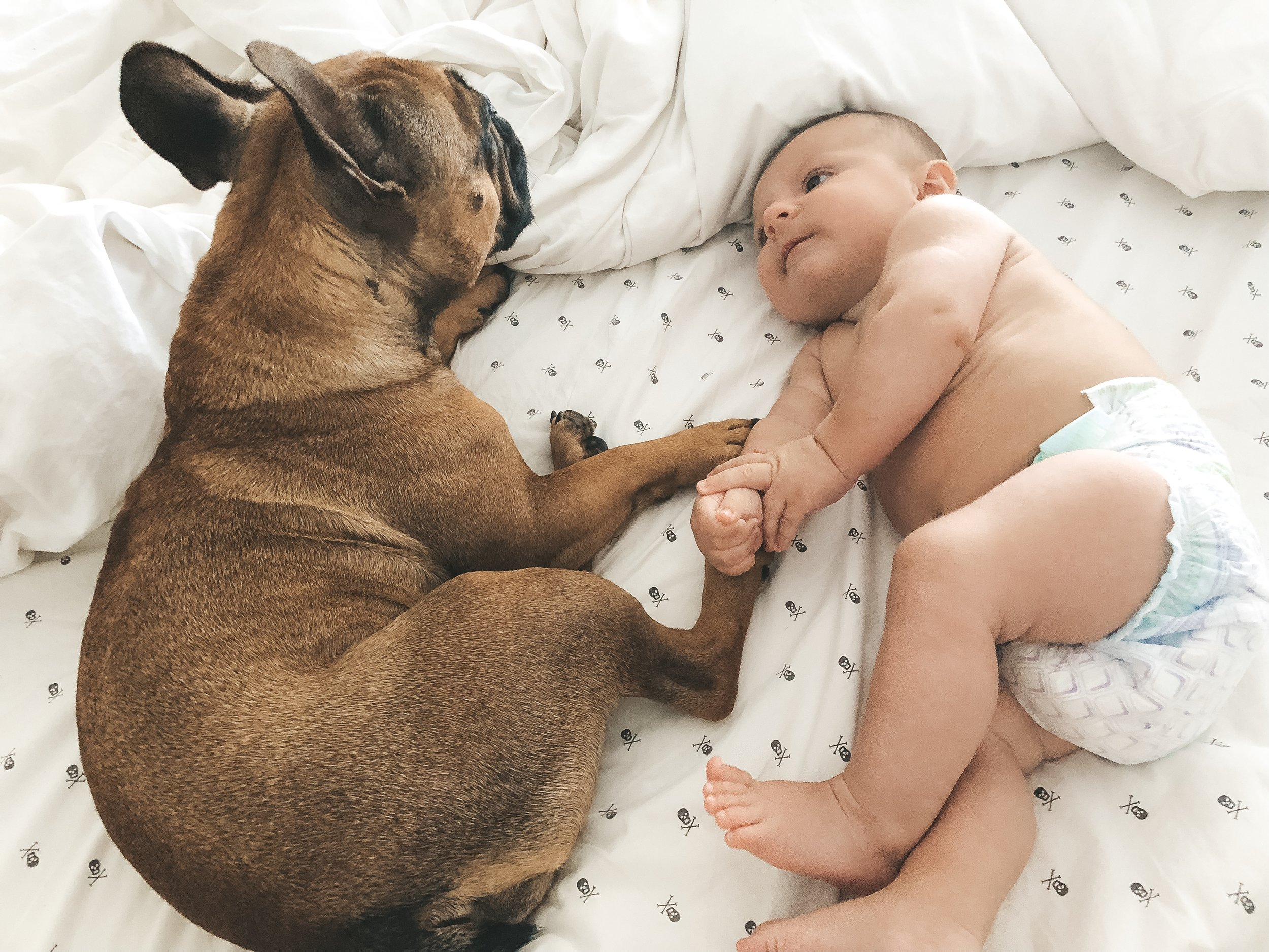 Jett and Dwayne.  Frenchie and baby besties.