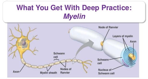 Deep Practice The Talent Code Myeline Graph