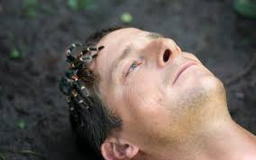 Bear Grylls Fear Spider on Face Stop start do