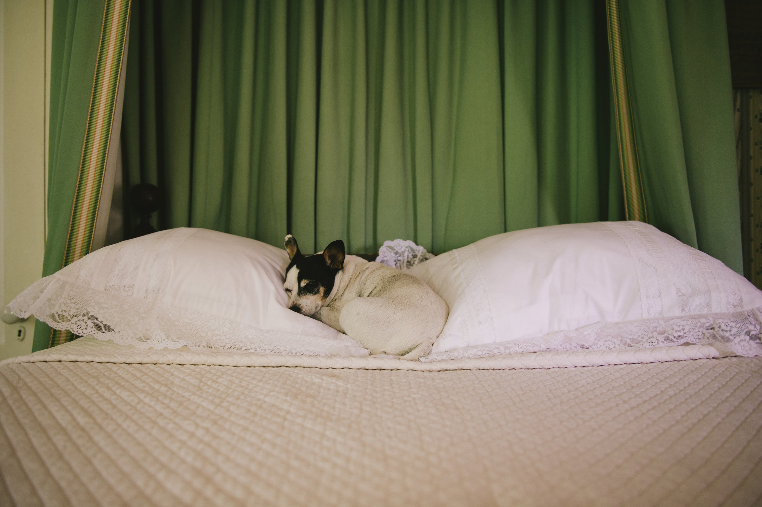 Rita resting on my Great-grandmother's bed from the 1850's.| Photograph by: Michelle Gardella © 2015