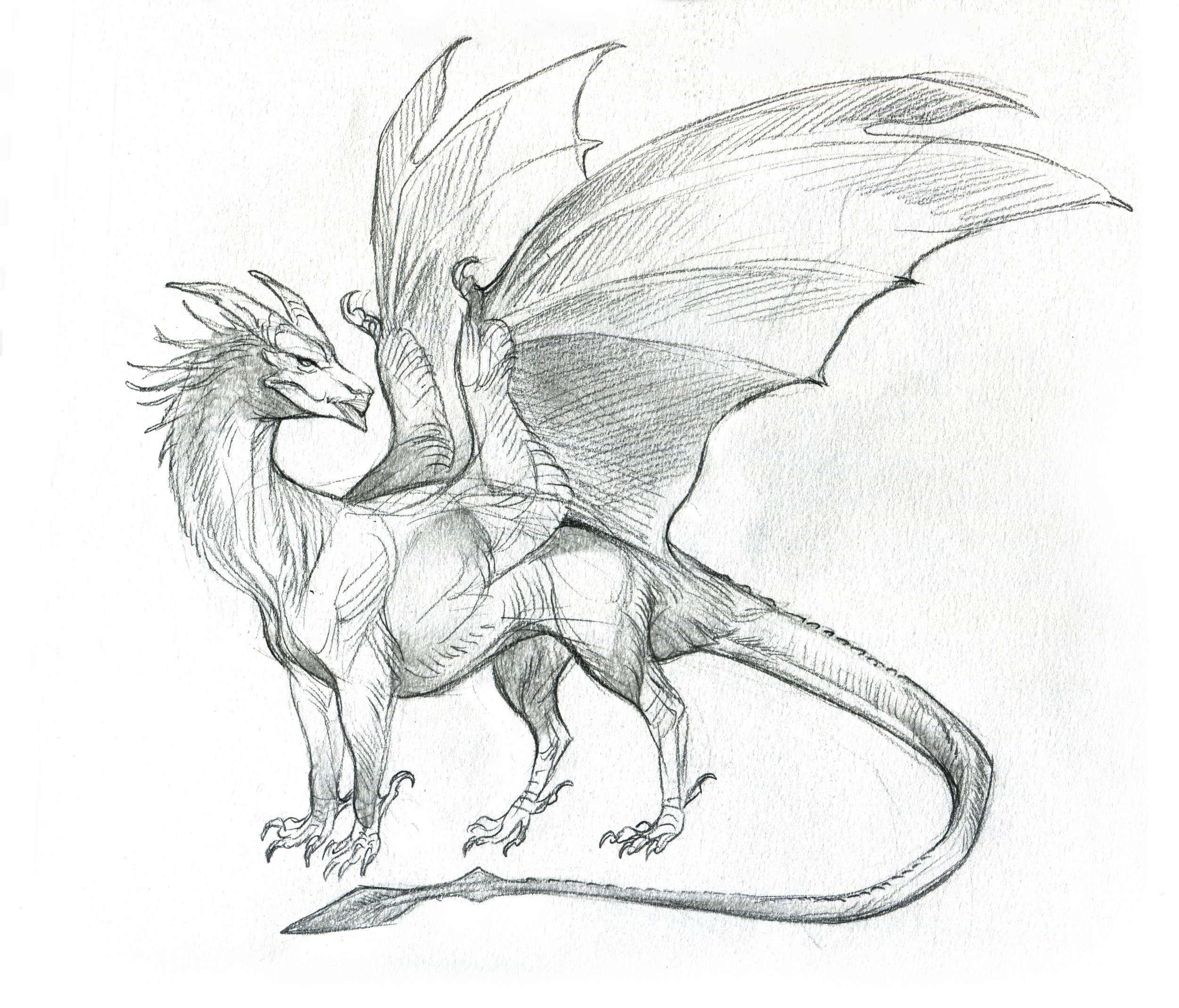 YiQi_dragonSketch.jpg
