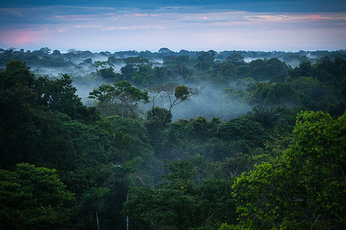 Amazon Basin (Image source:https://www.flickr.com/photos/zaidbs/10738469735/)