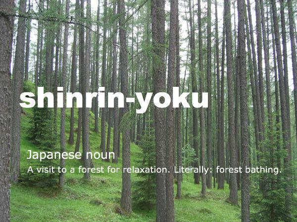 (Source:http://www.luminearth.com/2012/04/15/shinrin-yoku-forest-bathing/)