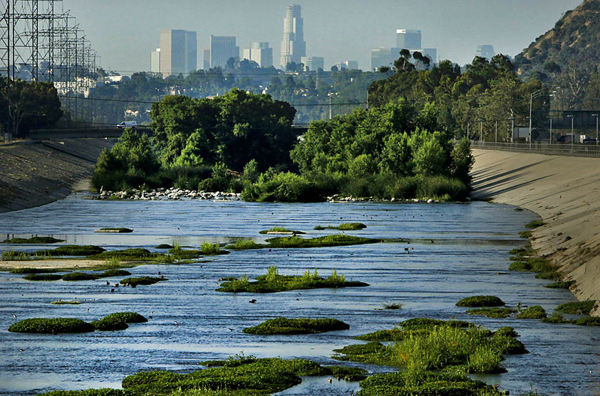 A wildlife restoration project implemented on the LA River offers an idea of the potential of a greener river space