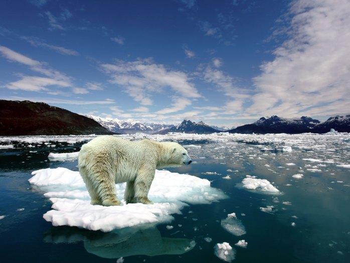 melting-ice-polar-bear-on-206311.jpg