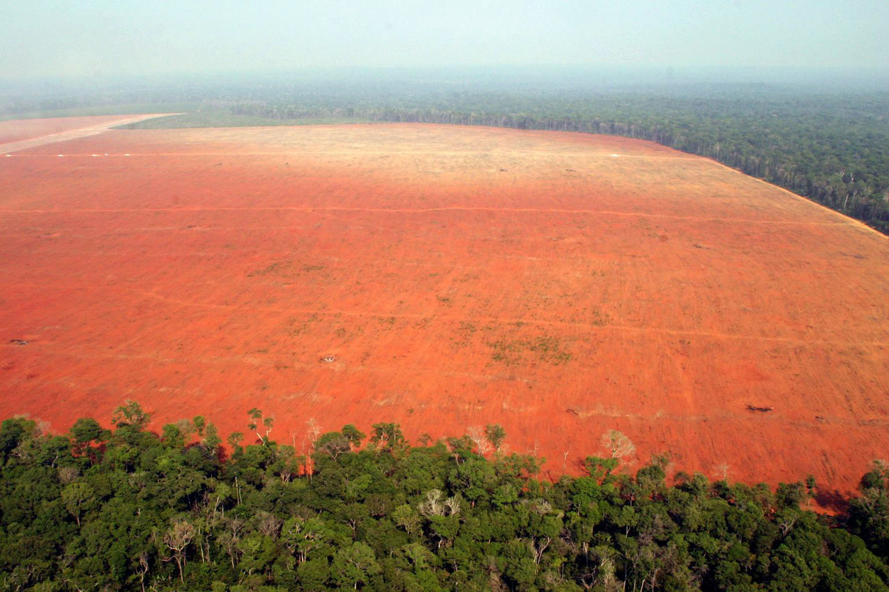 Huge swathes of land cleared out of the Amazon Rainforest  Image by  Greenpeace