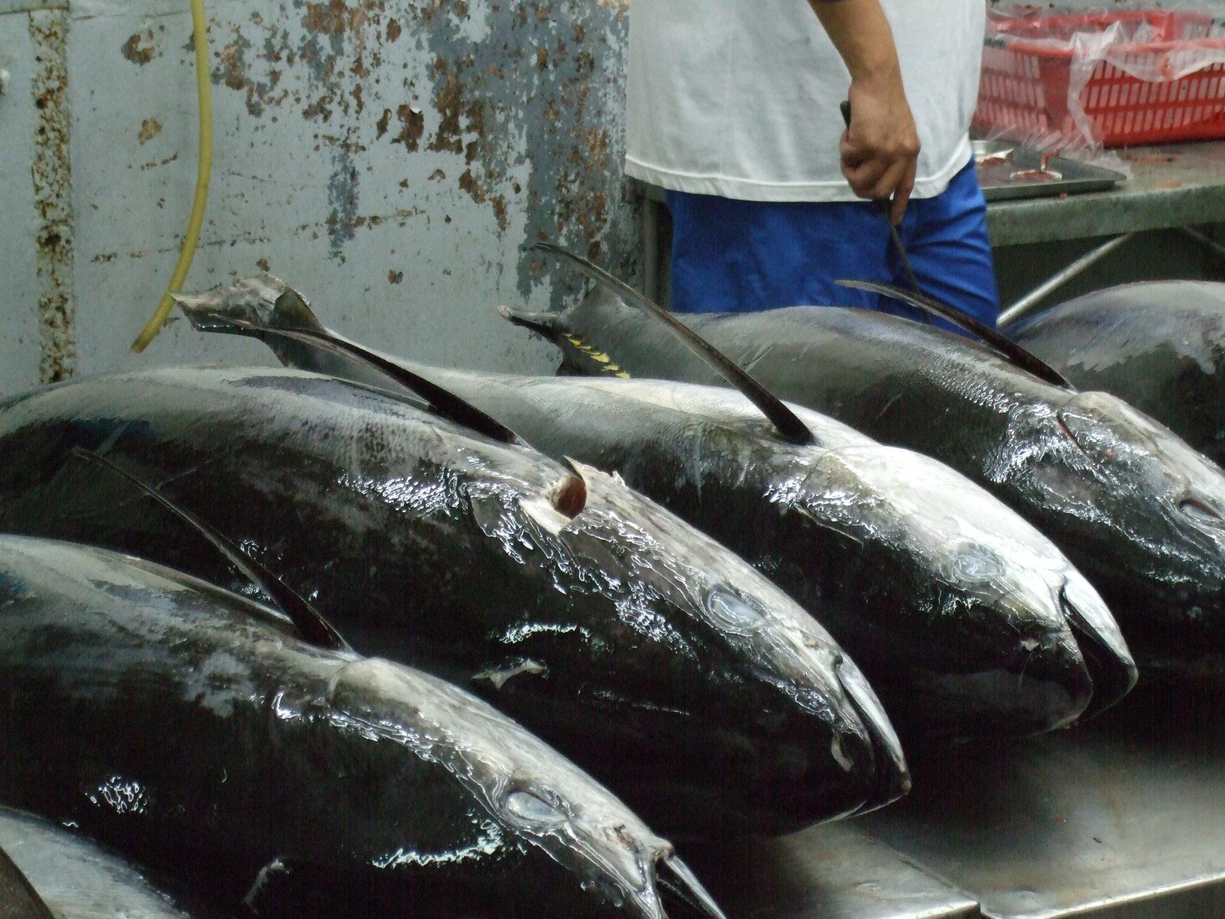 The Philippines 033.JPG
