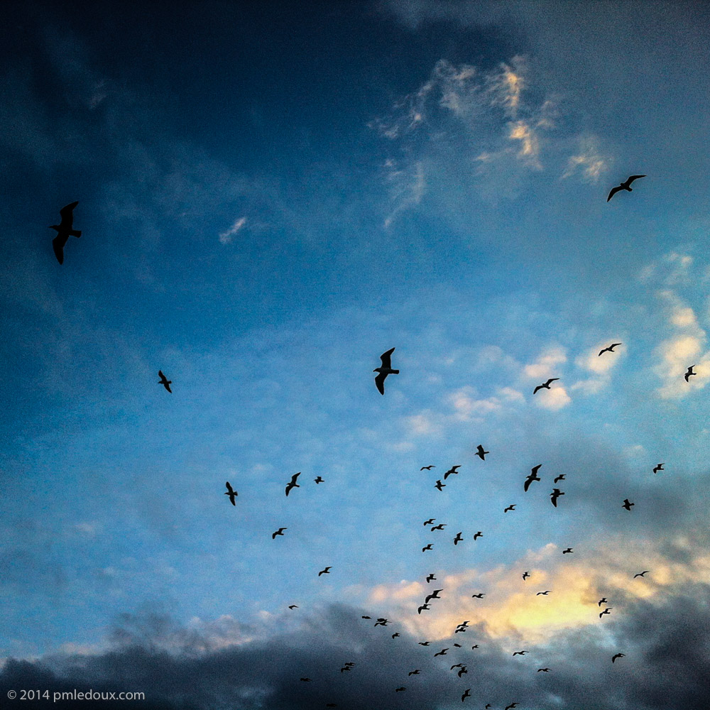 20121127-IMG_2957.jpg
