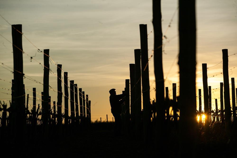 Uruguay autumn vineyard.jpg