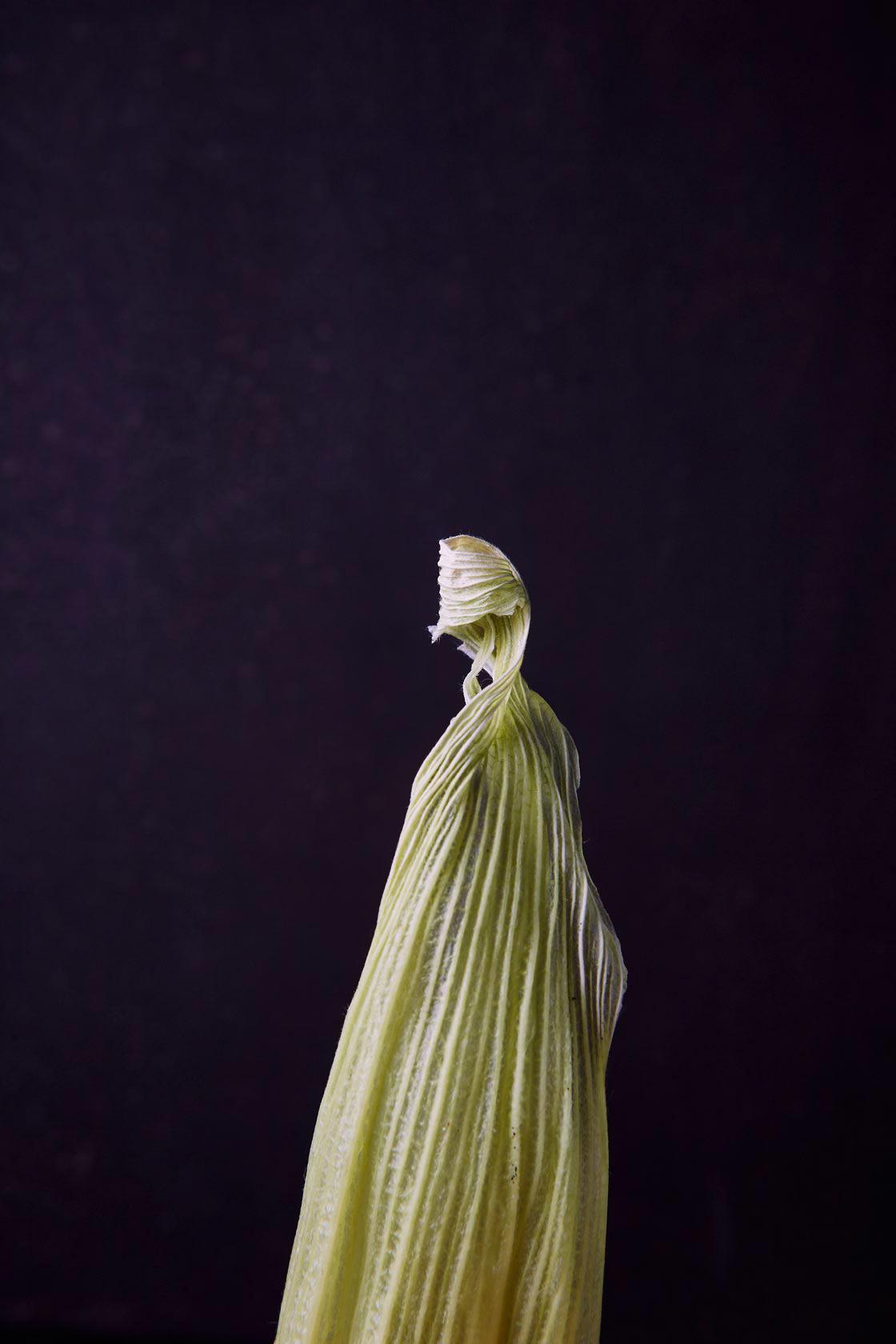Corn-leaf-Barrio-1680 copy.jpg