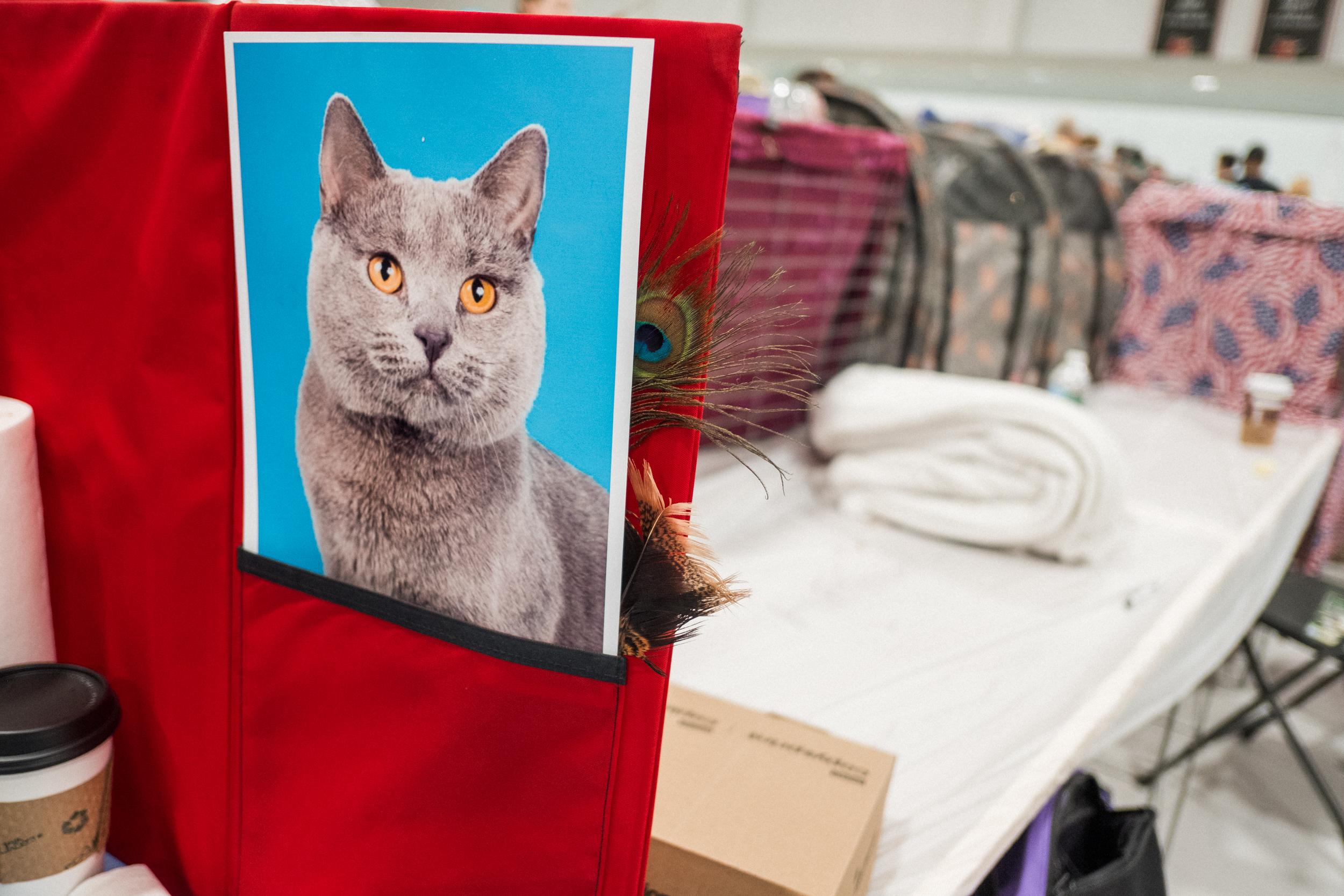 Cat Show-20.jpg