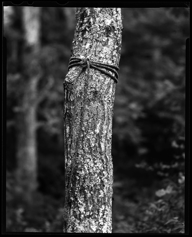 tree LF-1.jpg