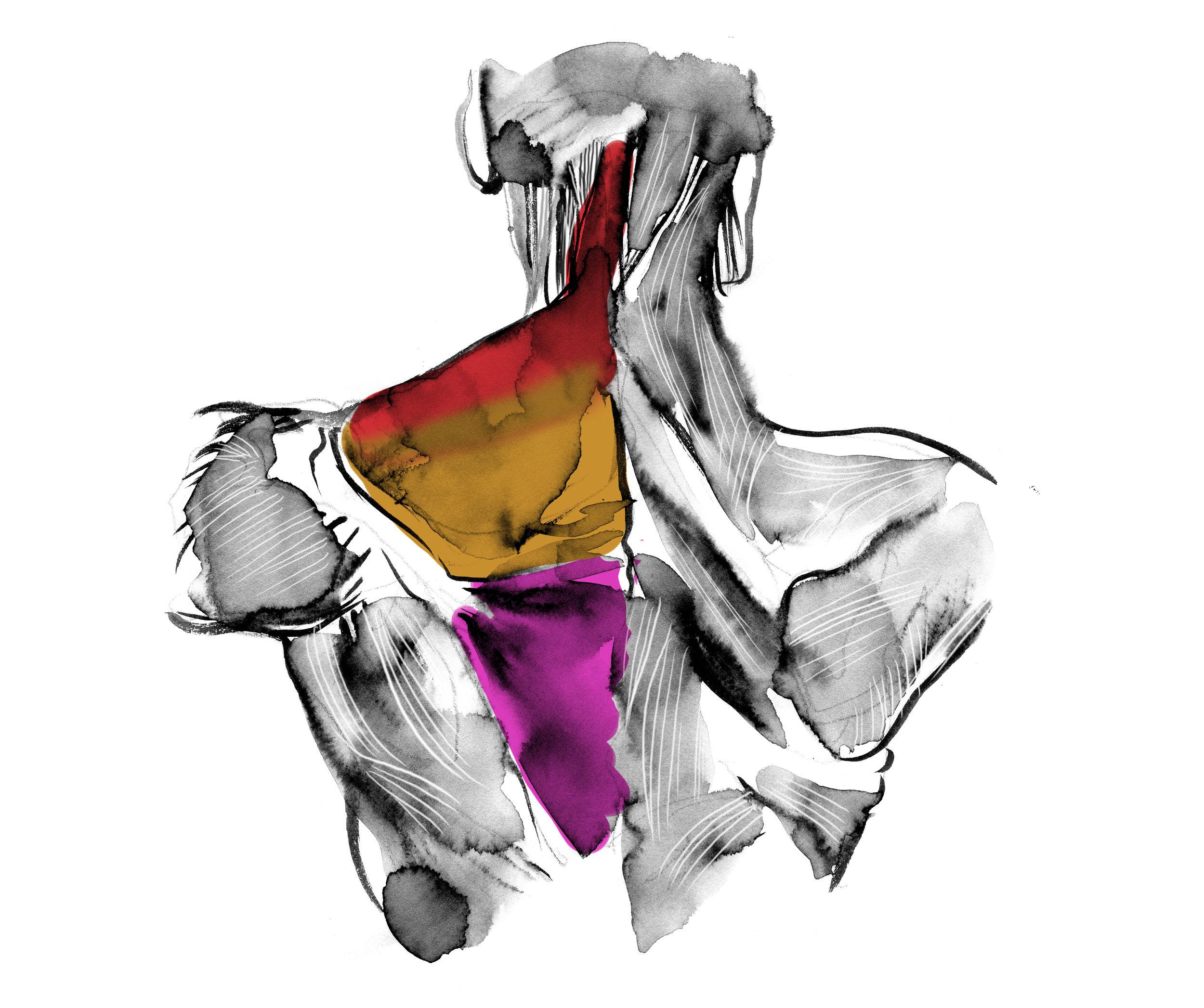 shoulder 4.jpg