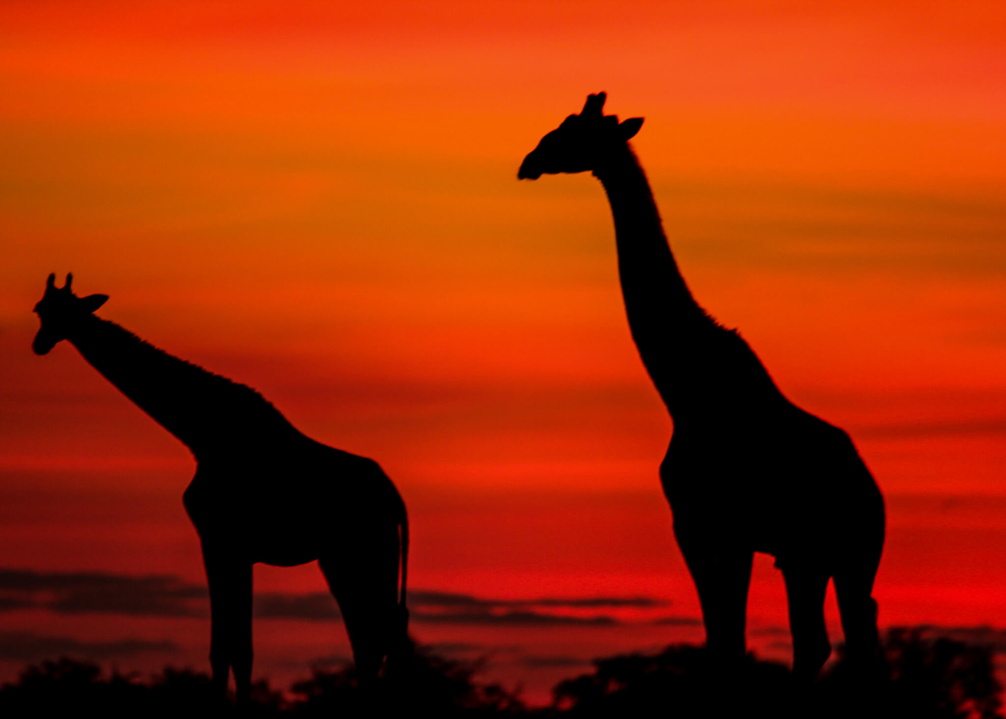 Barclay Stenner Safaris