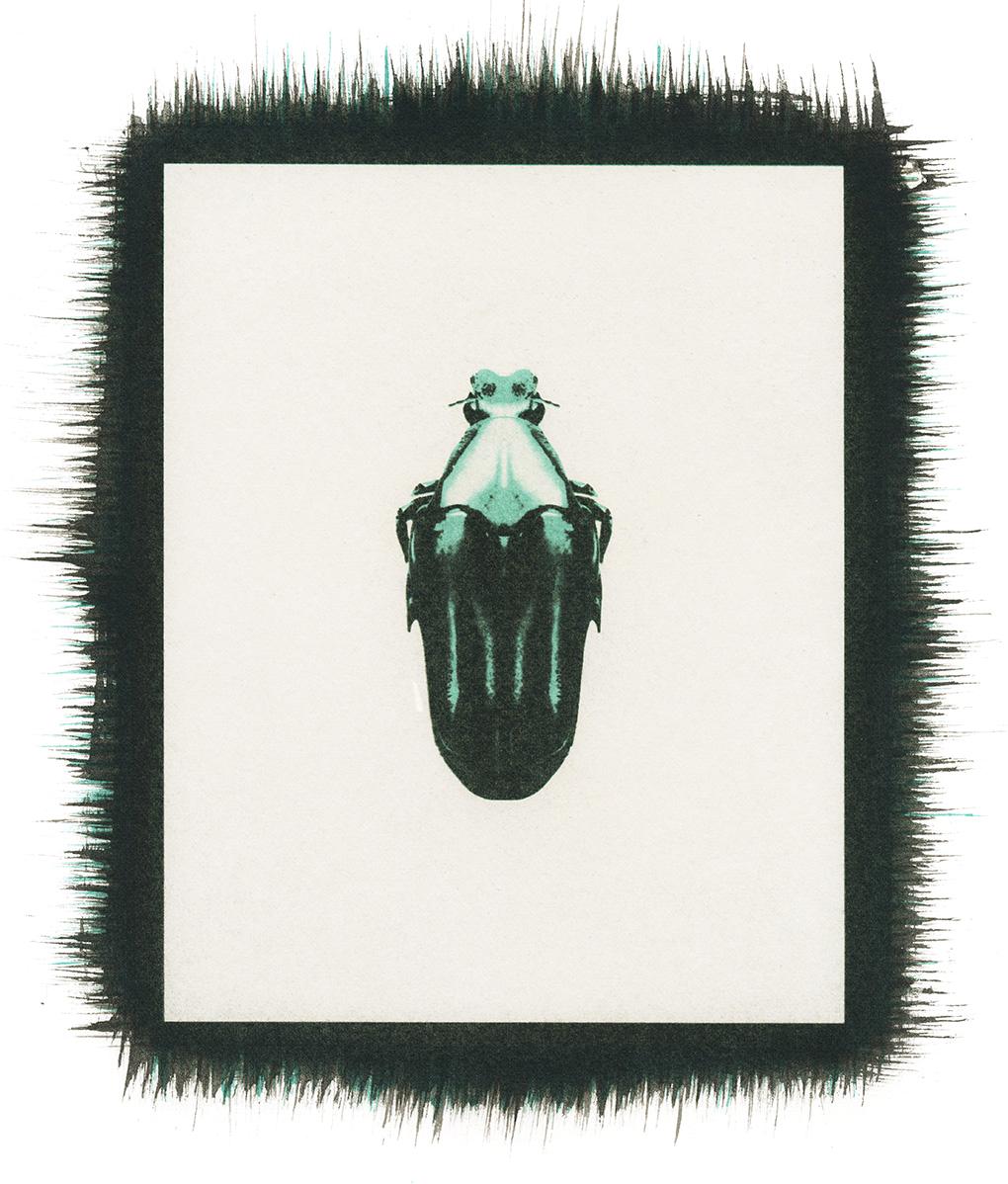 Beetle No.1.jpg