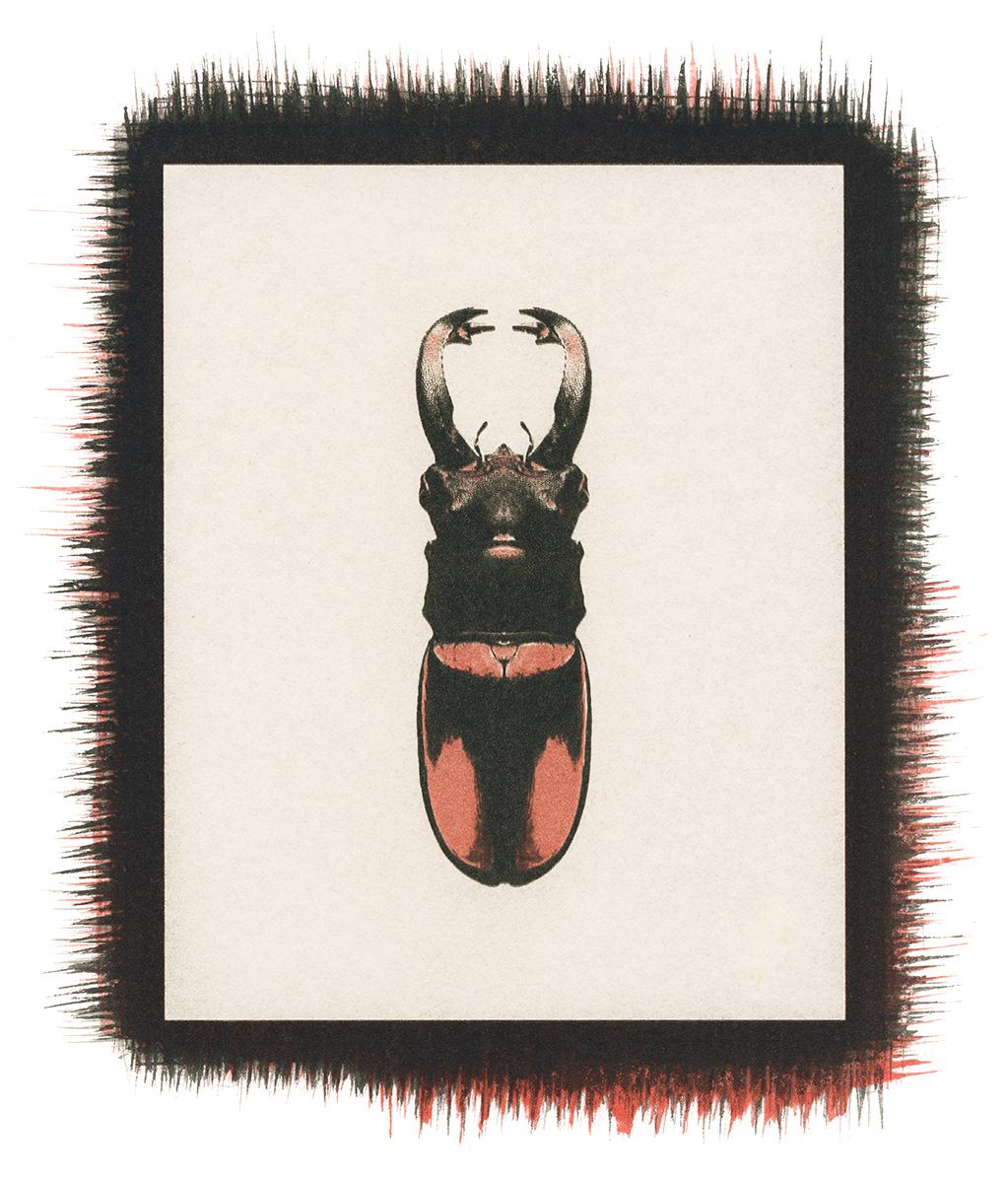 Beetle No.3.jpg