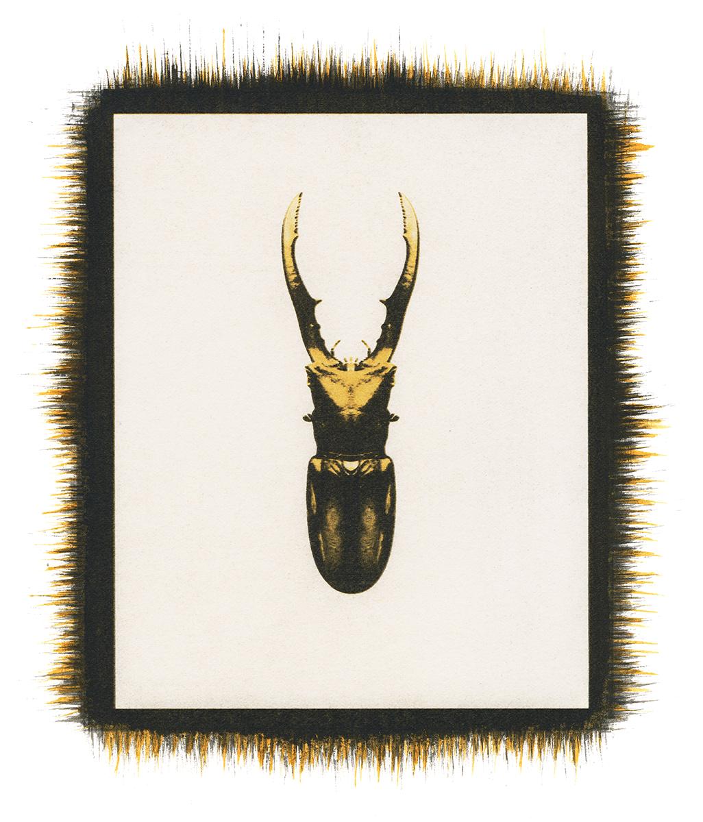 Beetle No.4.jpg