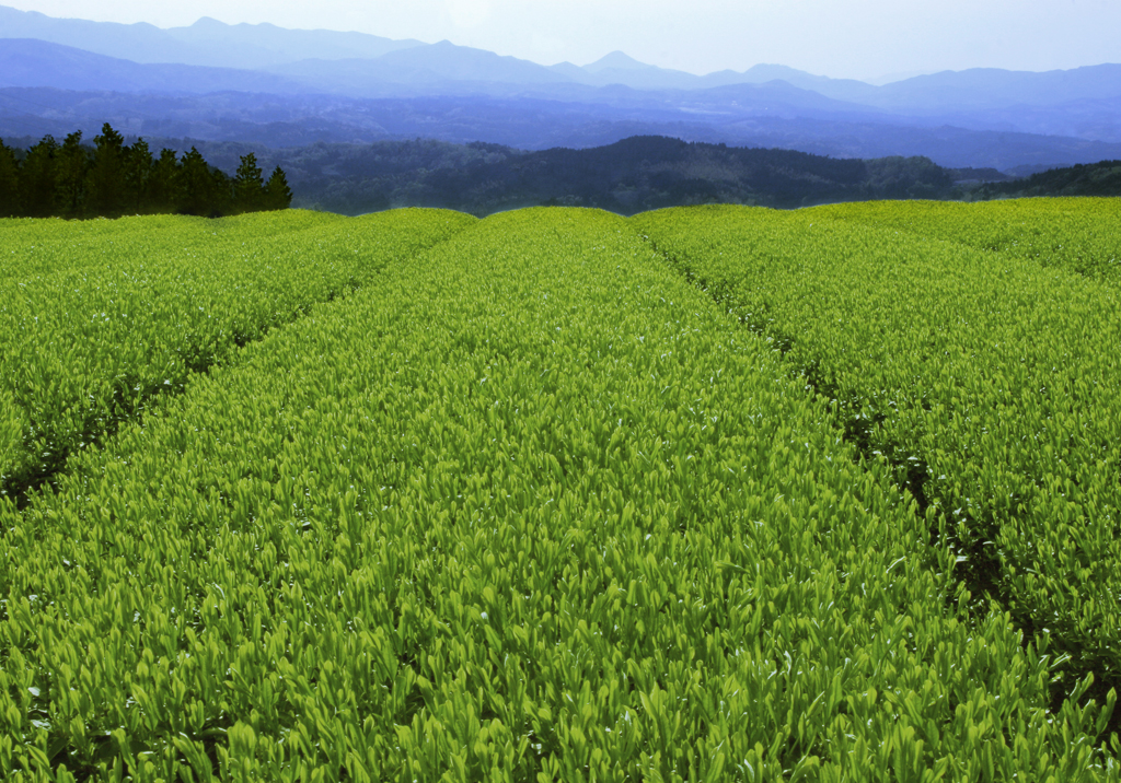 20130102_rishifarm.jpg
