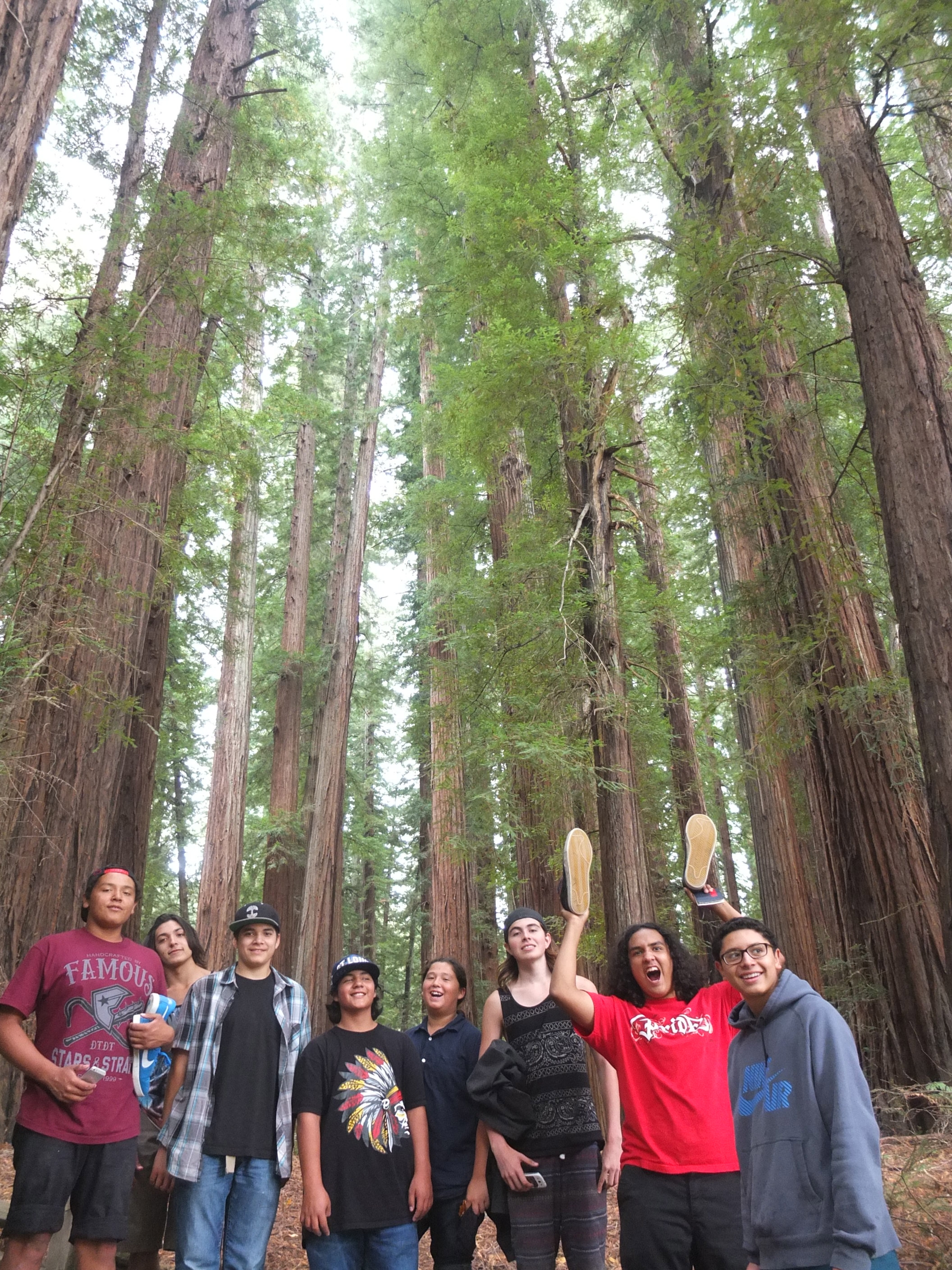 On the shoulders of giants, Intertribal youth in rare redwood forest reserve. native species. Protect them. youth grow like trees