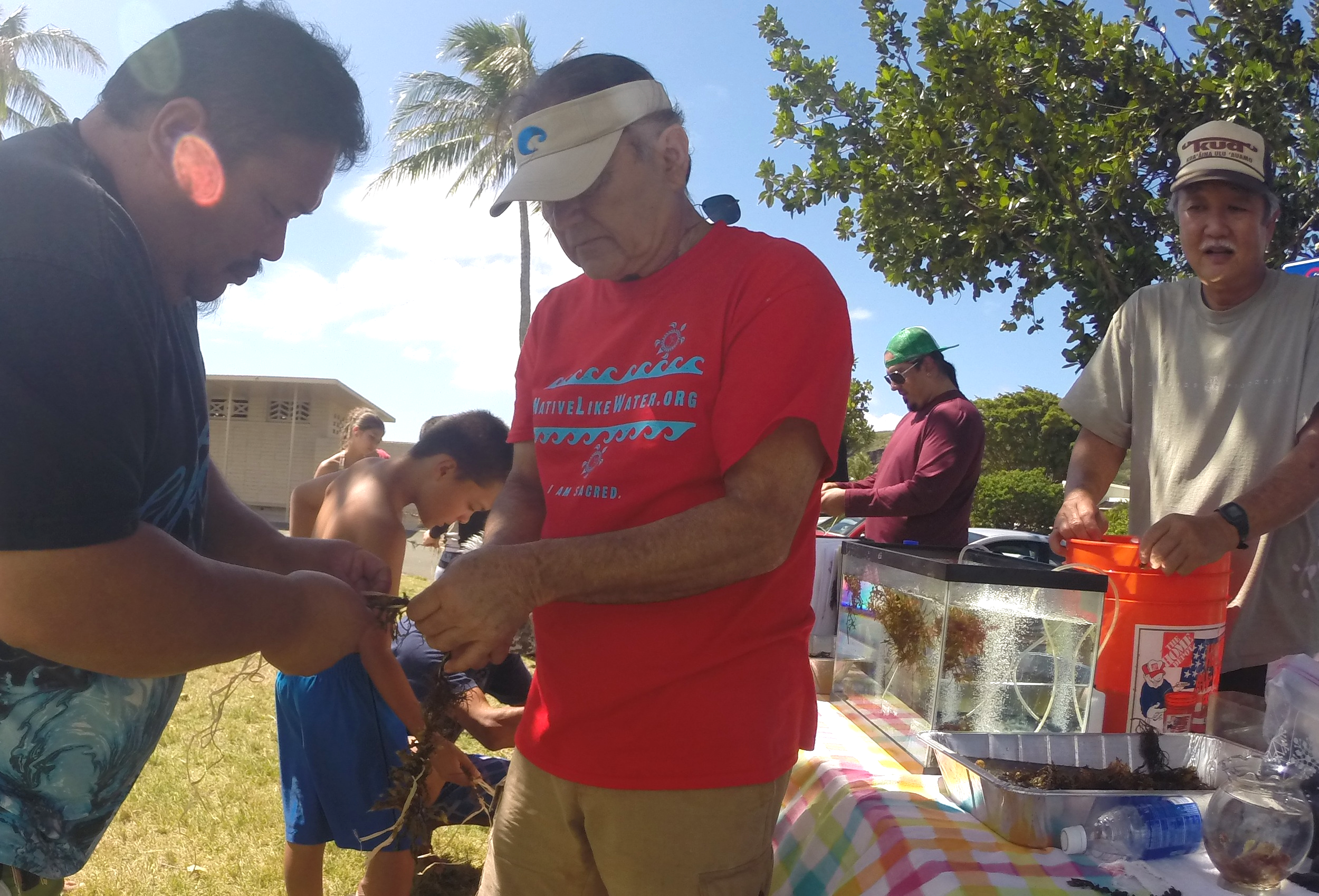 Youth and elders assist in the Seaweed Lomi Restoration Project and learn the importance of sea veggies to the Native Diet.