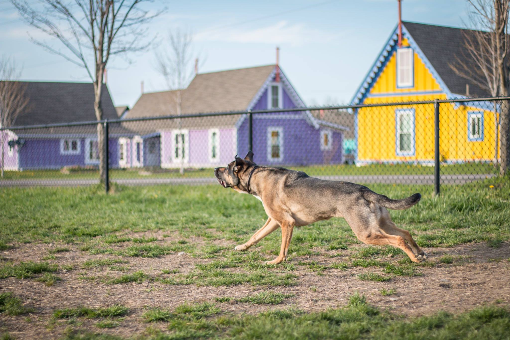 boiceville-cottages-dogs.jpg