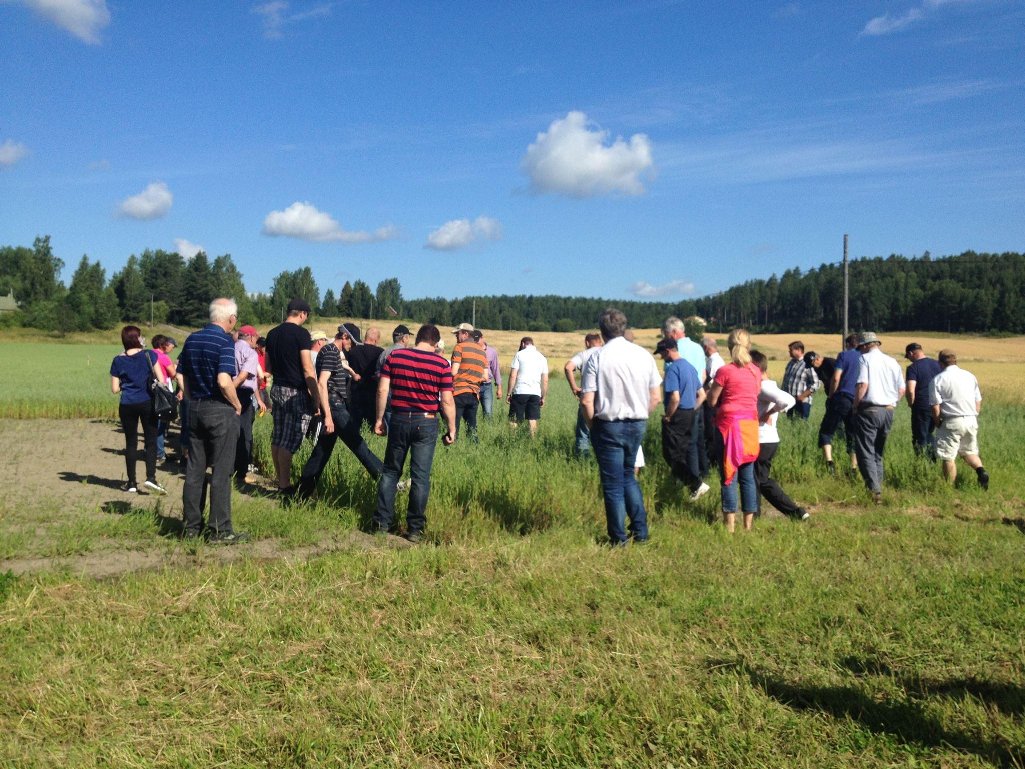 Kerääjäkasvien pellonpiennarpäivässä 7.8.2015 oli yli 70 osallistujaa.