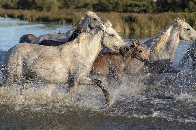 The Four Horsemen of the (Relationship) Apocalypse — Pam Evans